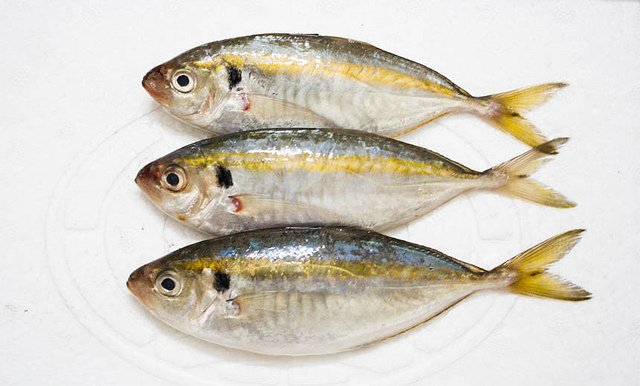 Cá chỉ vàng tươi ngon