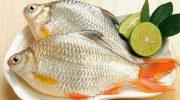 Mẹo làm cá mè hôi – cá cóc sông thơm ngon đậm đà