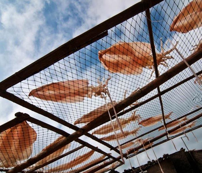 Chỉ những con mực to, dày thịt, tươi ngon mới được đem đi làm mực khô